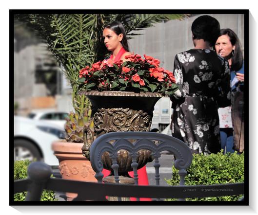 Napoli, Flowers...