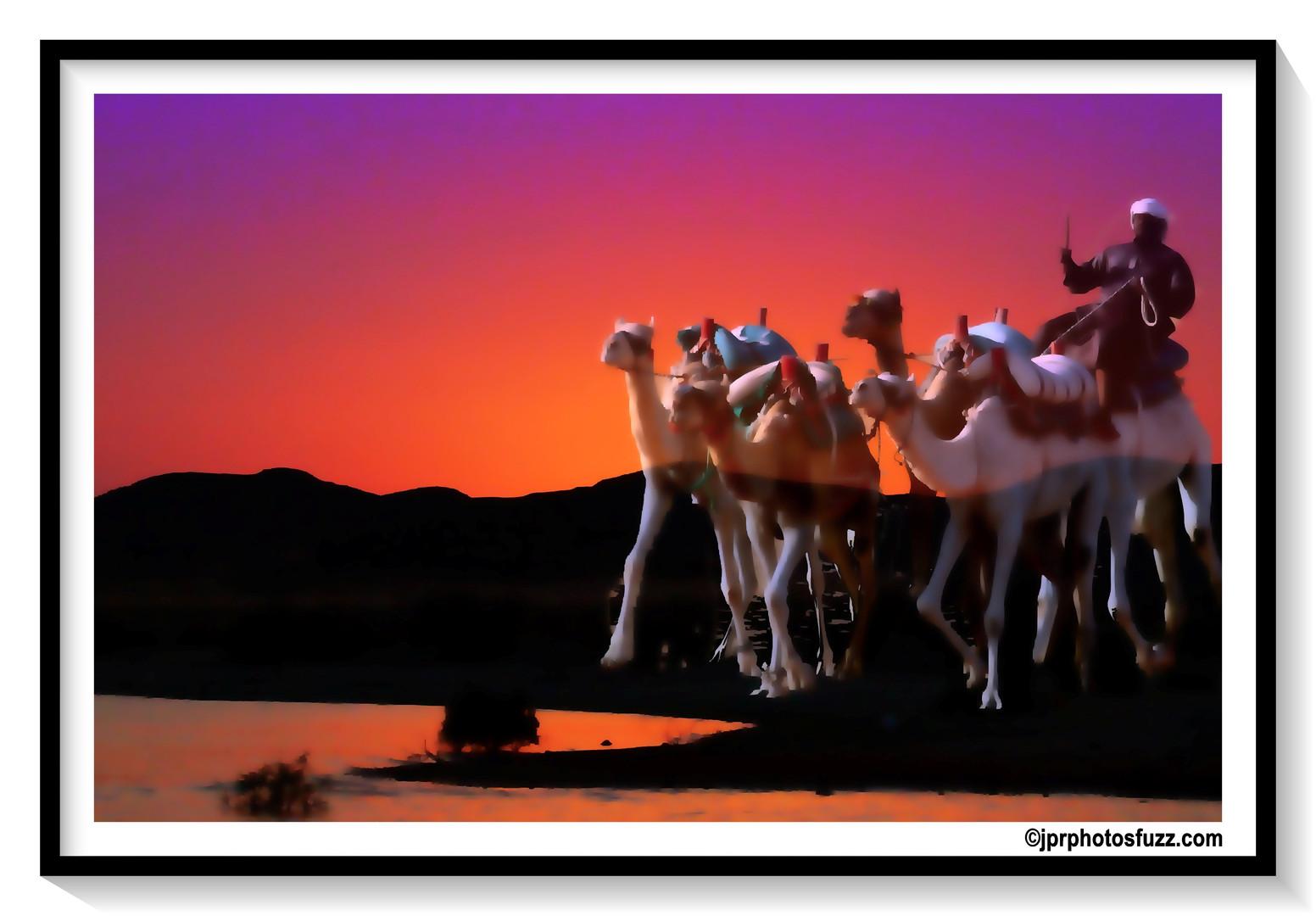ABOU SINBEL Camel 1 - Egypte