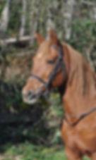 Zoey-profile-pic.jpg