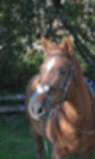 Kona-Profile-pic.jpg