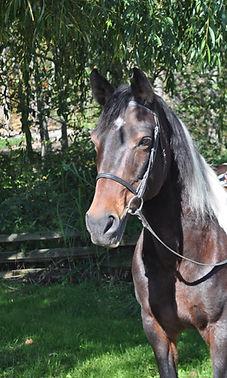 Santota-profile-pic.jpg