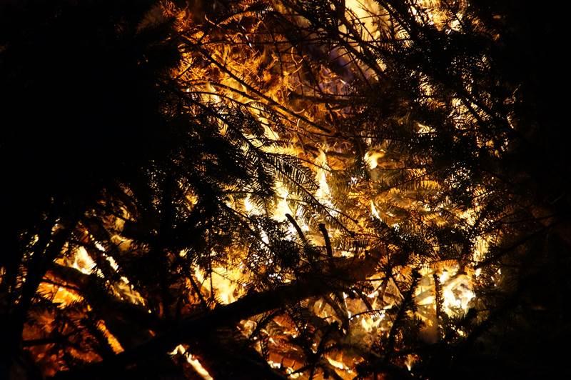 Tannenbaumverbrennen19