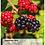 "Thumbnail: Kalender ""Faszination Natur 2022"" A4 Hoch"