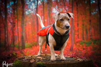 Jack genießt den Herbst