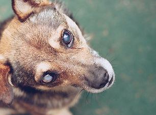 blind_dog.jpg