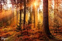 wood_light_edited.jpg