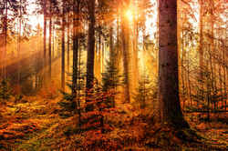 Landschaftsaufnahme Wood_light