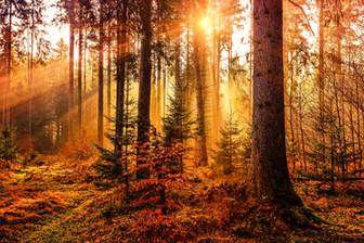 wood_light.jpg