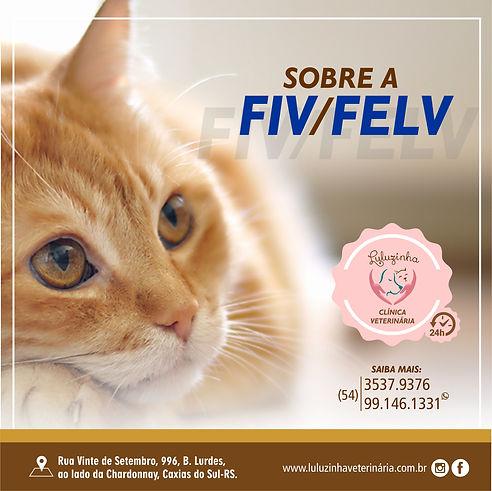 FIV FELV.jpg