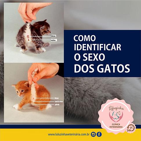 SEXO DOS GATOS 2021.jpg