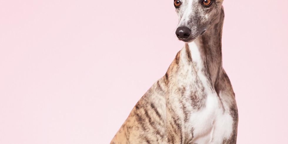 Adult Dog Training - Carrickfergus
