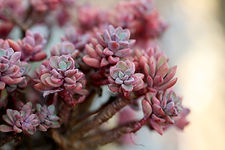 a-fleshy-plant-1465057_1920.jpg