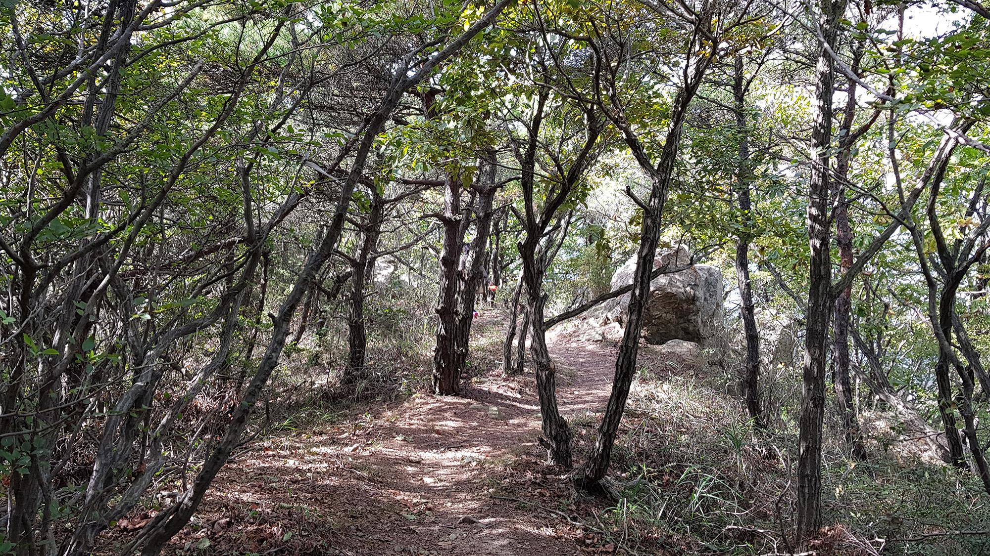 양로봉 산책로