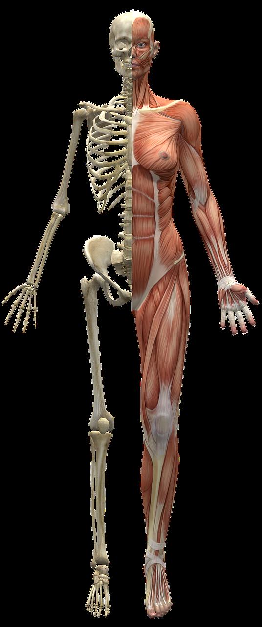 Alexander Technique to retrain your muscles,