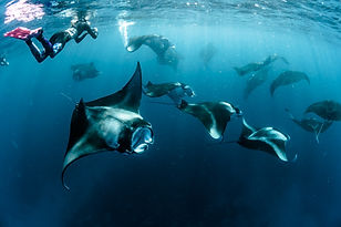 Swimming with Mantas