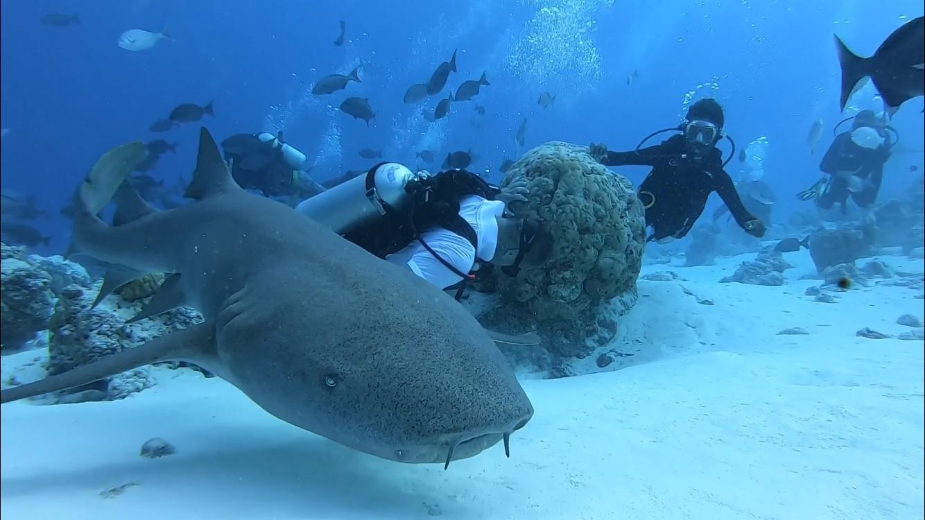 Diving with Nurse Sharks.jpg