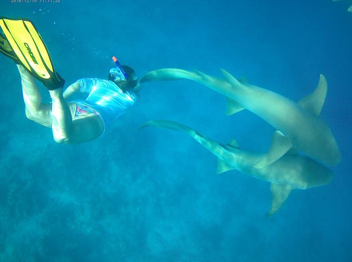 Snorkeling with Nurse Sharks.jpg