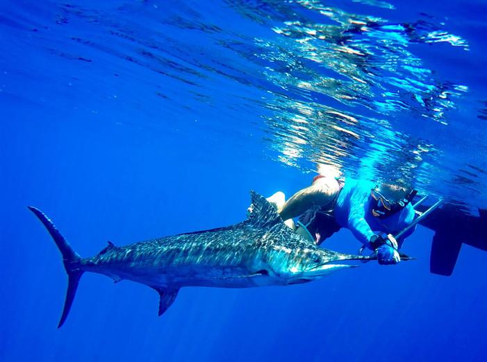 Marlin release