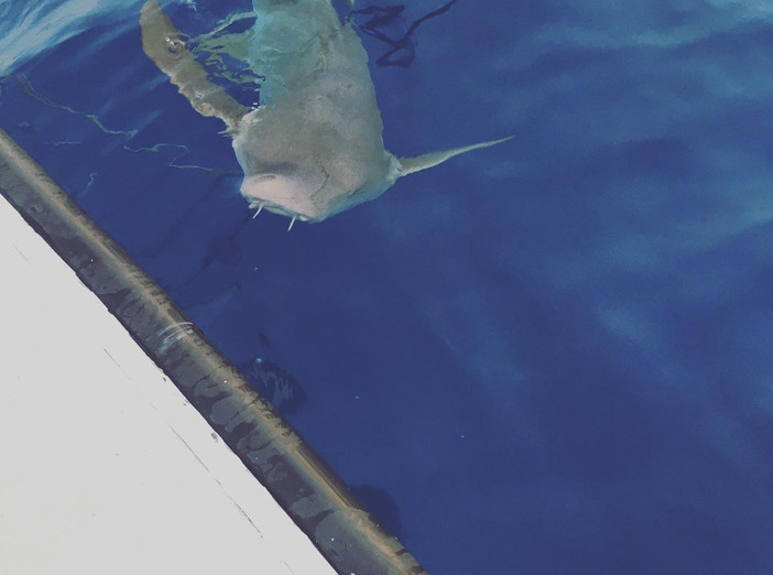 Nurse sharks swiming near the yacht.JPG