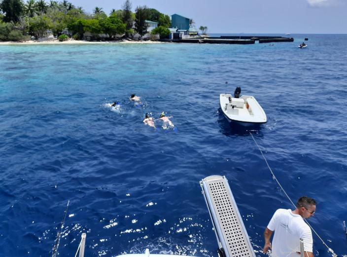 Snorkeling fish tank.jpg