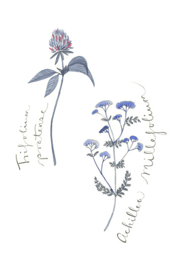Herbal Medicine for Women