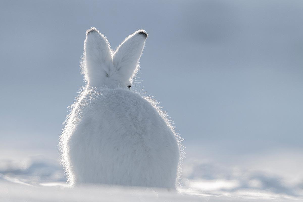 Lapinou sous la neige