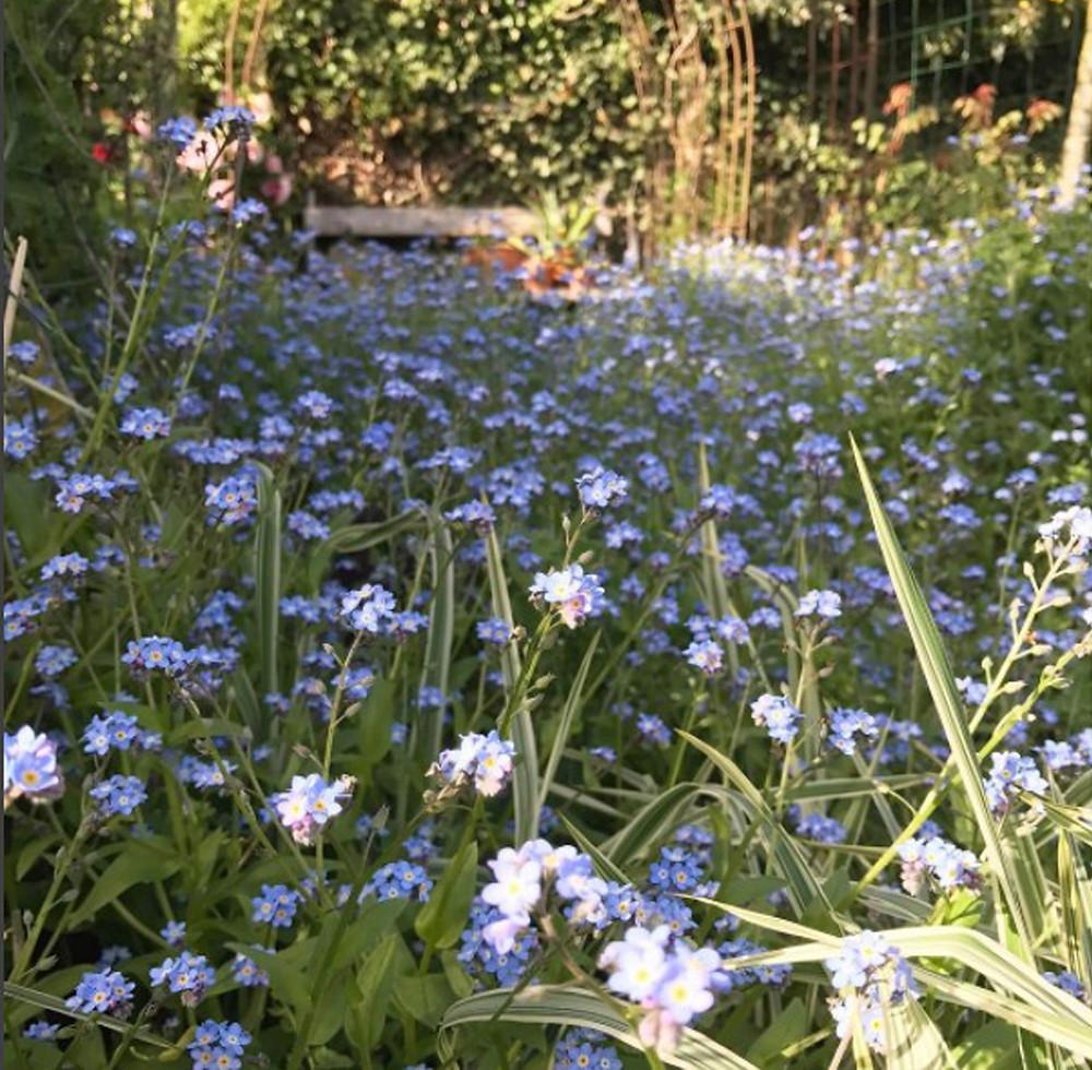 Jardin Pop Fleurs
