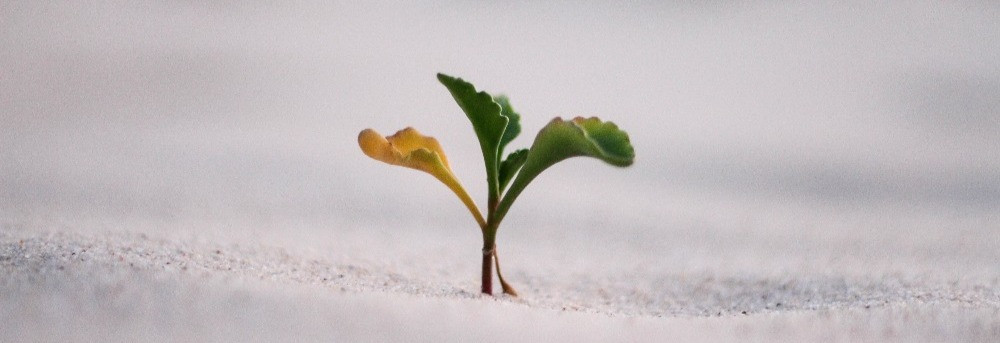 Dying stem on a green plant represents the impact leak.