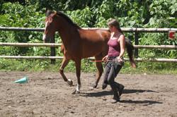 caballos en su belleza natural