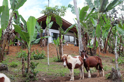 new built eco houses