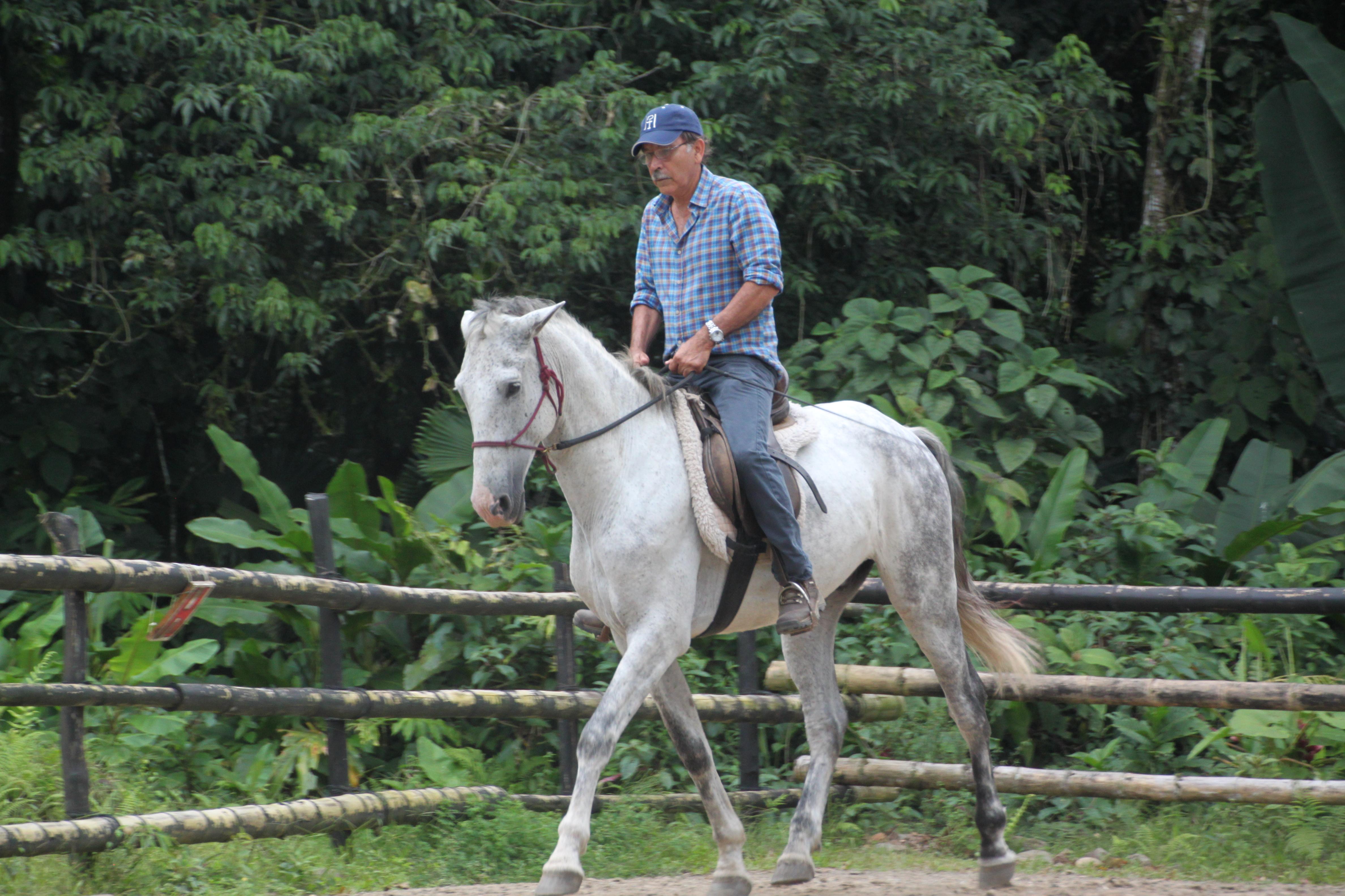 caballos lindos