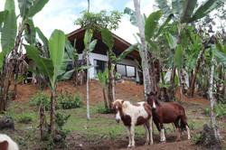 Casa Octagono