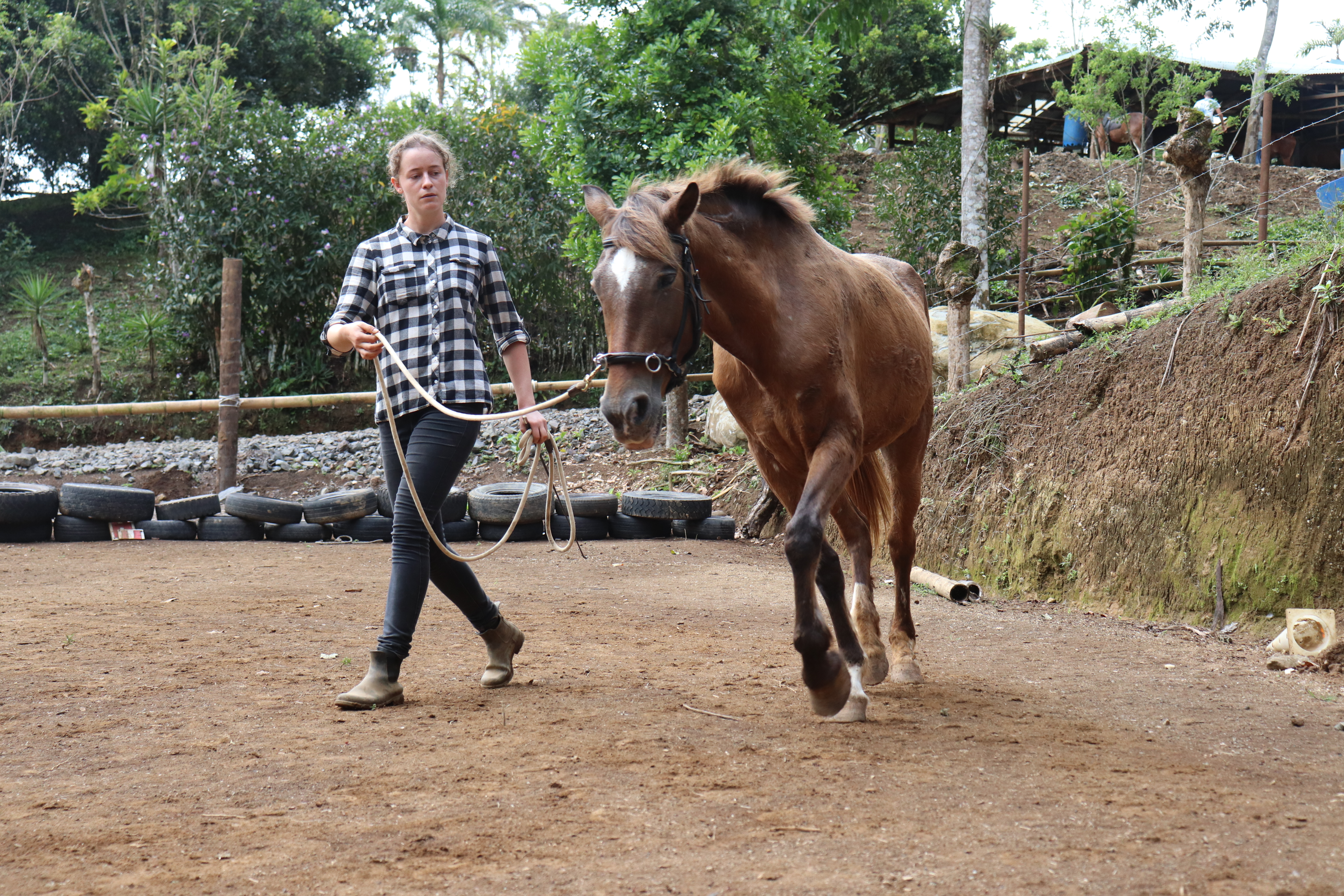 rehab of a rescue horse