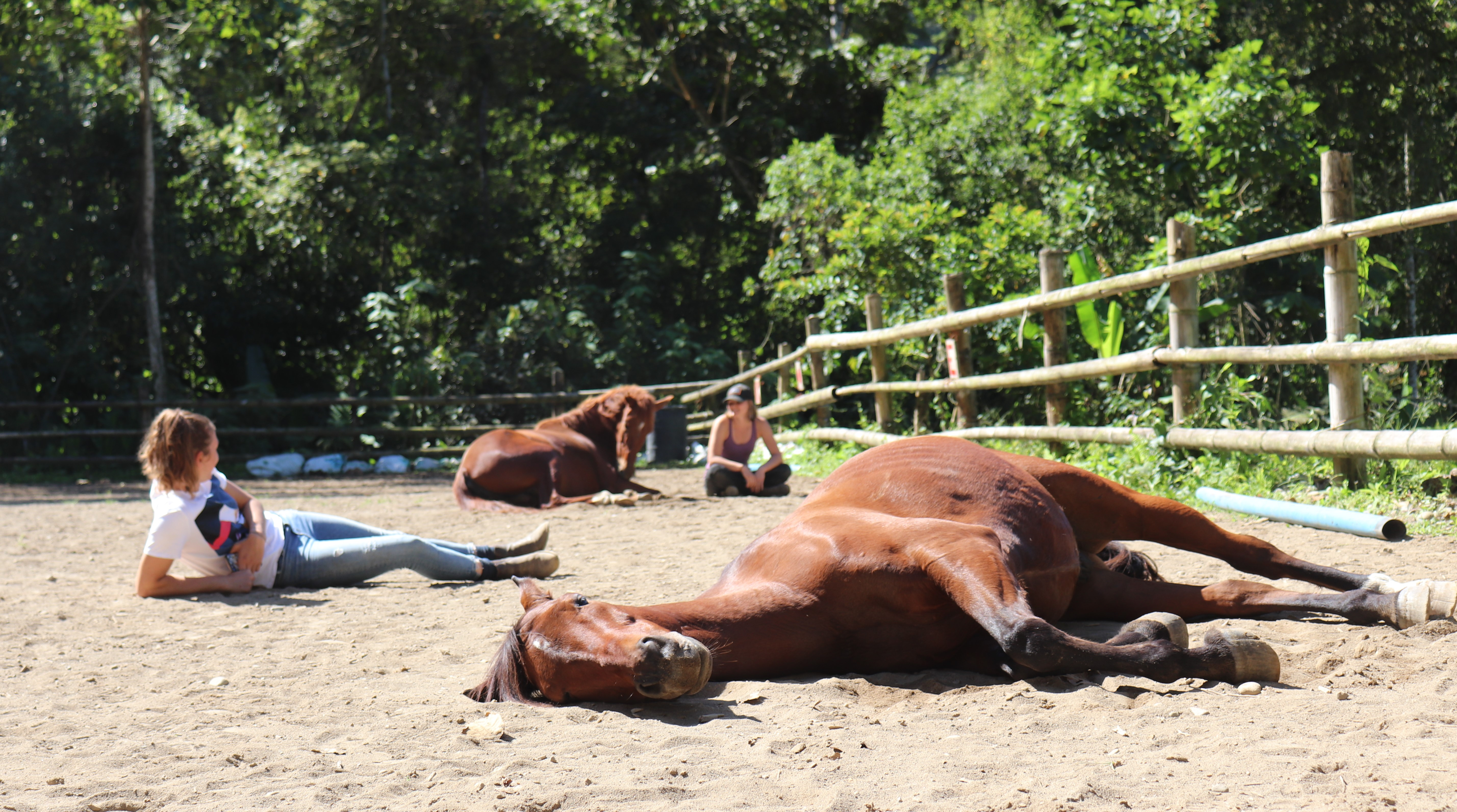 relax with our horses