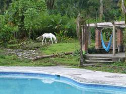 Finca Soley Pool Area