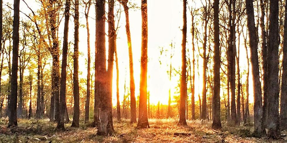 Enracinement de groupe en forêt