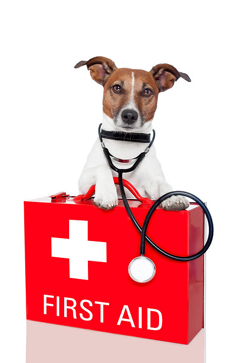 dog with a red  first aid kit.jpg