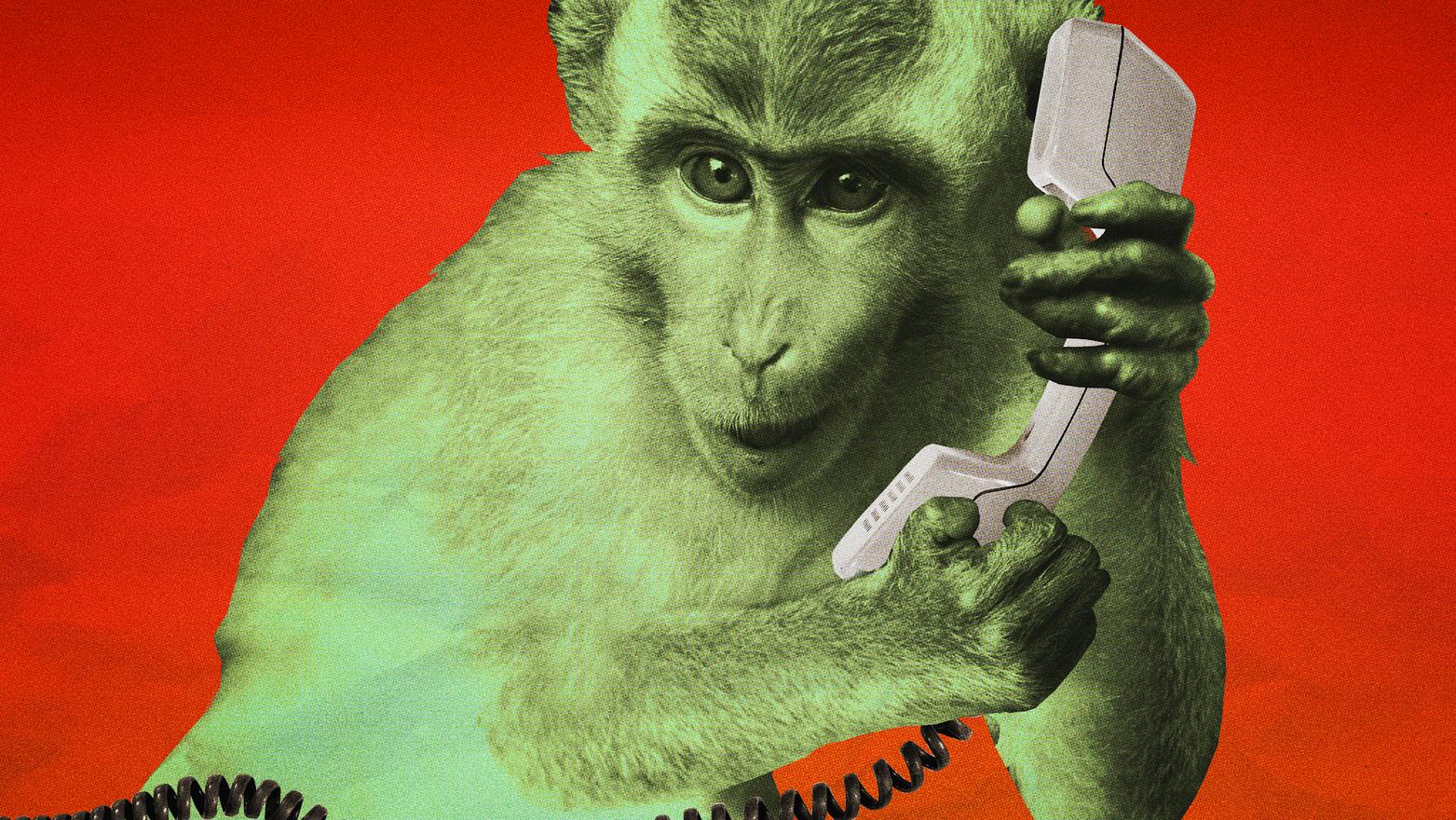 1528233623008-monkeyphone.png