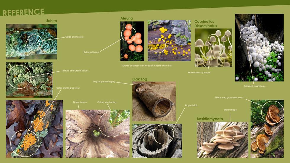 Reference_fungi.png