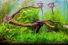 Angelfish Aquarium_edited.jpg