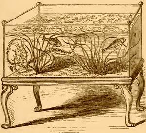 1856 Aquarium