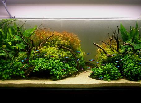 Aquascaping Design