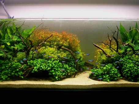 Aquascaping Design