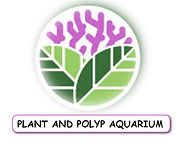 Plant n Polyp.jpg