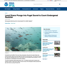 Local Divers Plunge into Puget Sound to Count Endangered Rockfish_July 2021.png