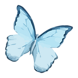 Akvarel motýl 9