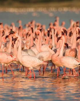 Flamingos_HW (1).jpg