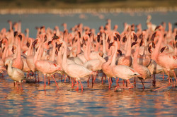 Flamingo View Estate