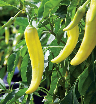 banana-pepper.jpg