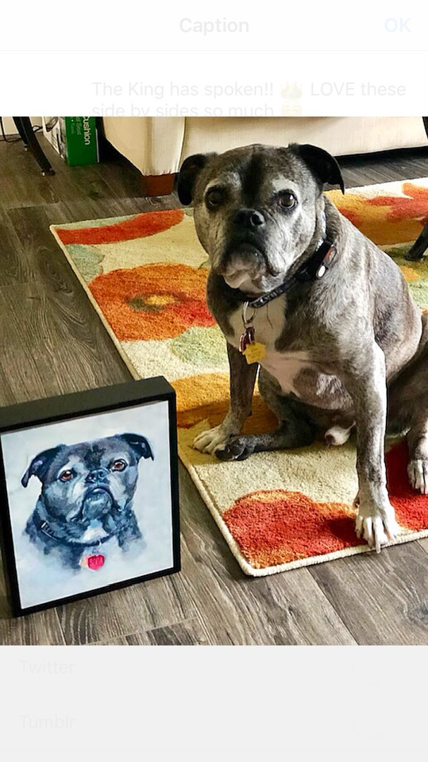 pet with painting7.jpg